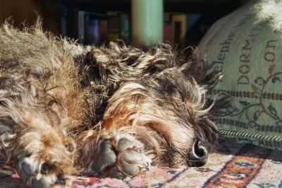 Dackelschlaf