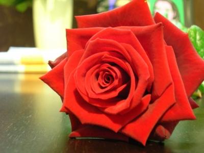 Valentins Rose
