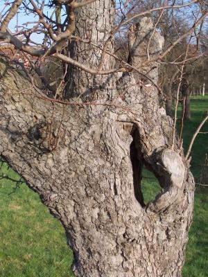 Obstbaum mit Durchblick