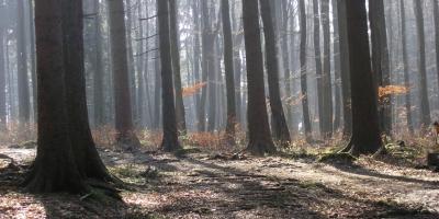 Kurz-vor-Frühling-Wald