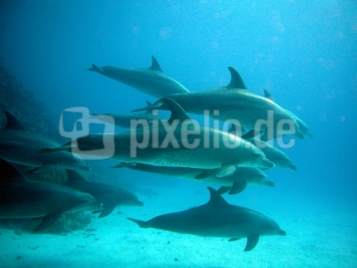 jk0303-Delfinschule