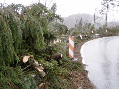 freigeschnittene Straße nach Windbruch durch Kyrill
