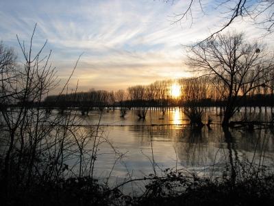 Hochwasser am Rhein 1