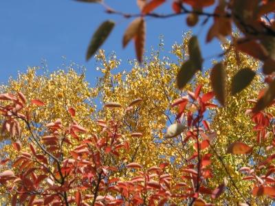 Blau-Gelber Herbst