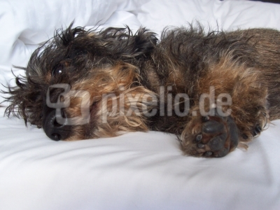 Wo schläft Hund am liebsten? Im Bett natürlich...