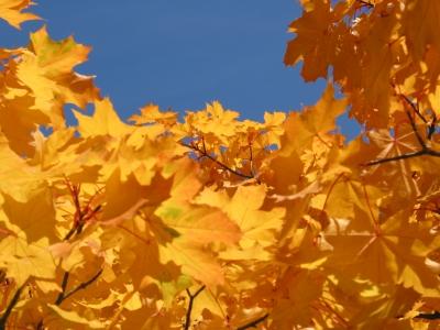 Herbst - Gelb auf Blau