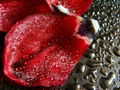 Tulpenblätter