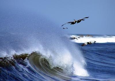 Pelikane Nicaragua 2