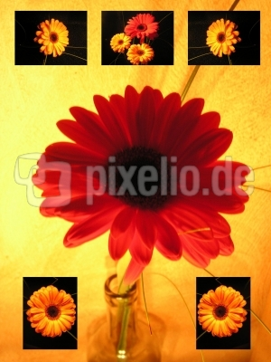 """Card  """"Red Flower"""""""