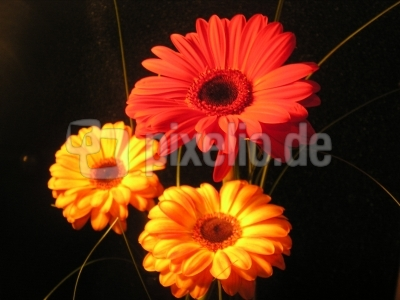Orange  & Red Flower