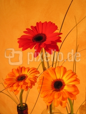 Orange & Red Flower 1