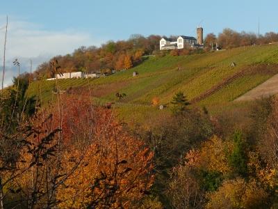 Der Heilbronner Wartberg