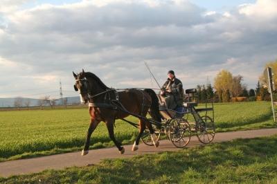 Pferdekutsche in der Abendsonne