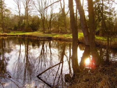Kleiner Teich im März