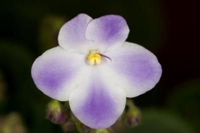 Orchidee_TS_01