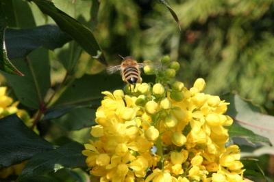 Fleißiges Bienchen 4