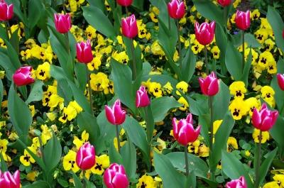 rot-gelb-grünes Frühlingsensemble in Reih und Glied