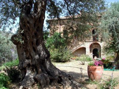 Landhaus auf Sizilien mit Olivenbaum