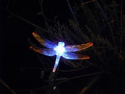 Leucht- Libelle