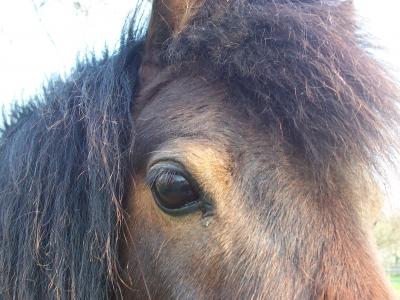 Ein Pony schaut dich an....