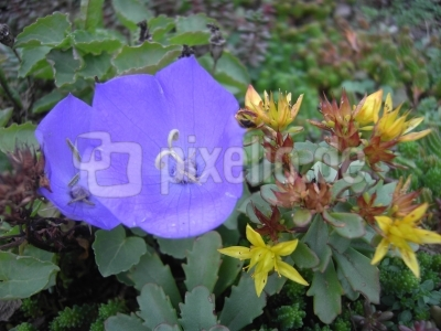 Blütenpracht am 26. Oktober (1)