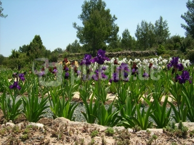 Lilienlabyrinth in Spanien