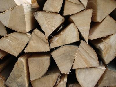Frisches Buchenholz