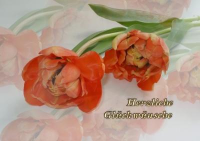 Kleine Tulpen - Grußkarte