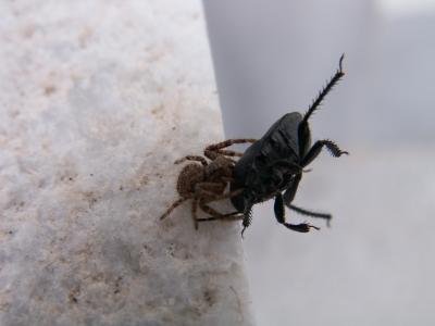 """Spinne mit """"Mörderhunger"""""""
