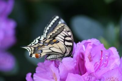 Schmetterling auf Blüte