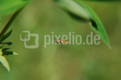 kleines Hubschraubervorbild