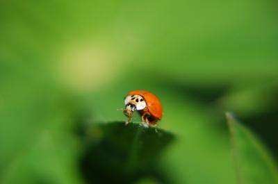 posing ladybug 2