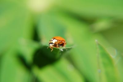 posing ladybug 3