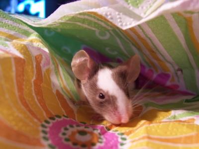 Mäuserich 1