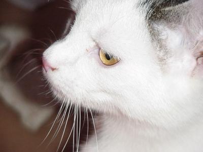 Caspar - lovely Eye