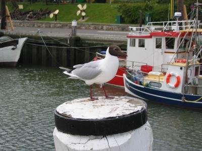 Möwe im Nordseehafen