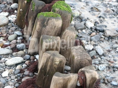 Holz und Meer