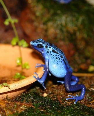 Blueboy wartet auf's Essen