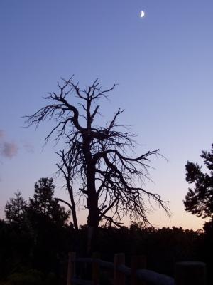 Kahler Baum vor Abendhimmel