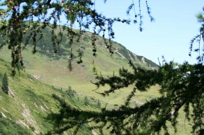 Blick auf die Almwiesen