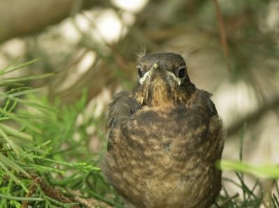 aus dem Nest geschupst (1)