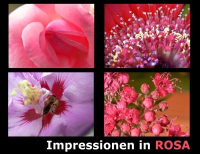 Impressionen in Rosa