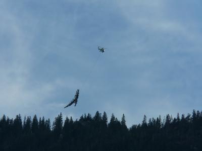 fliegende Bäume