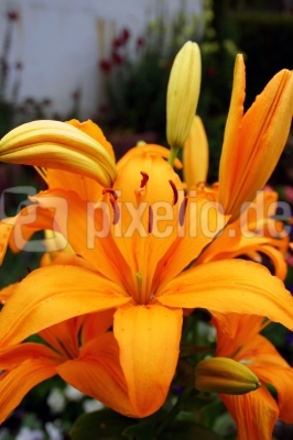 Edle Blüte