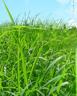 Gras und ein Stück Himmel