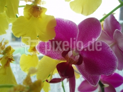 Orchideen-Mix