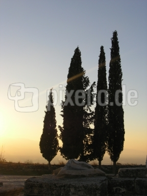 Zypressen im Sonnenuntergang1