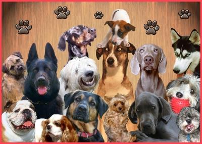 Hundekonferenz