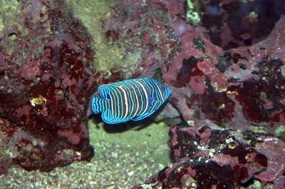 Meeres Aquaristik