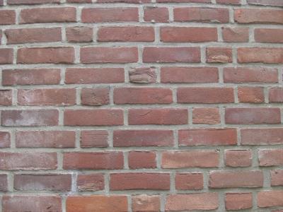 Auf der Lauer auf der Mauer...